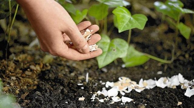Chất hữu cơ của đất ( Phần 2 )